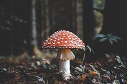 Image by Florian van Duyn
