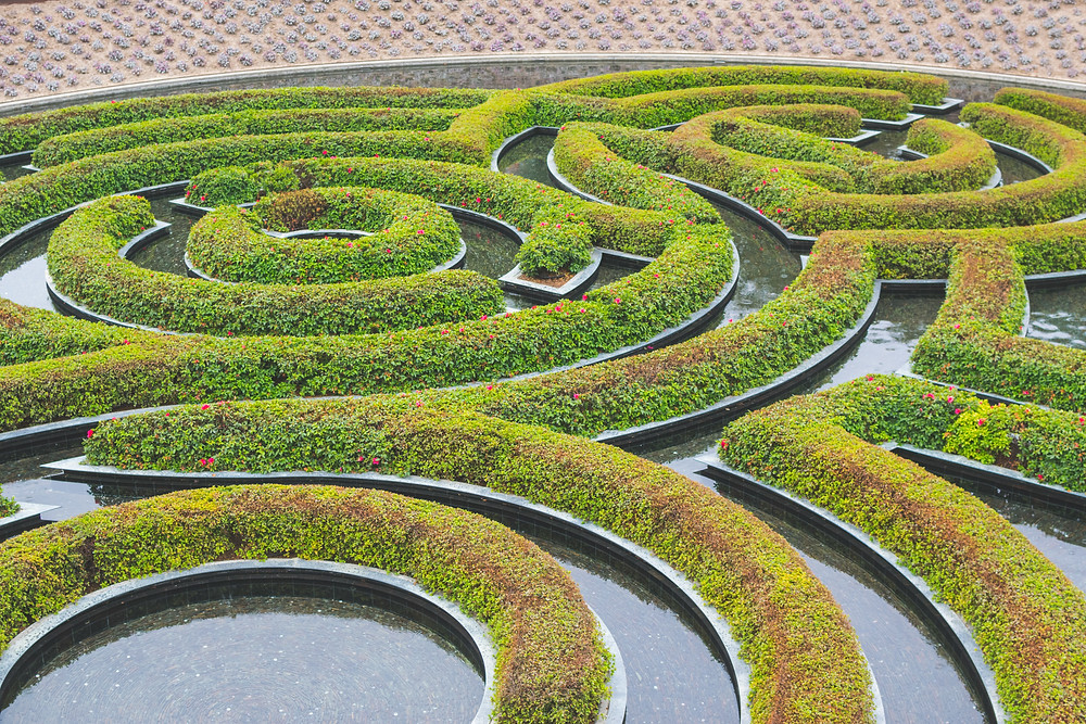 A maze of clipped hedges in concentric circles.