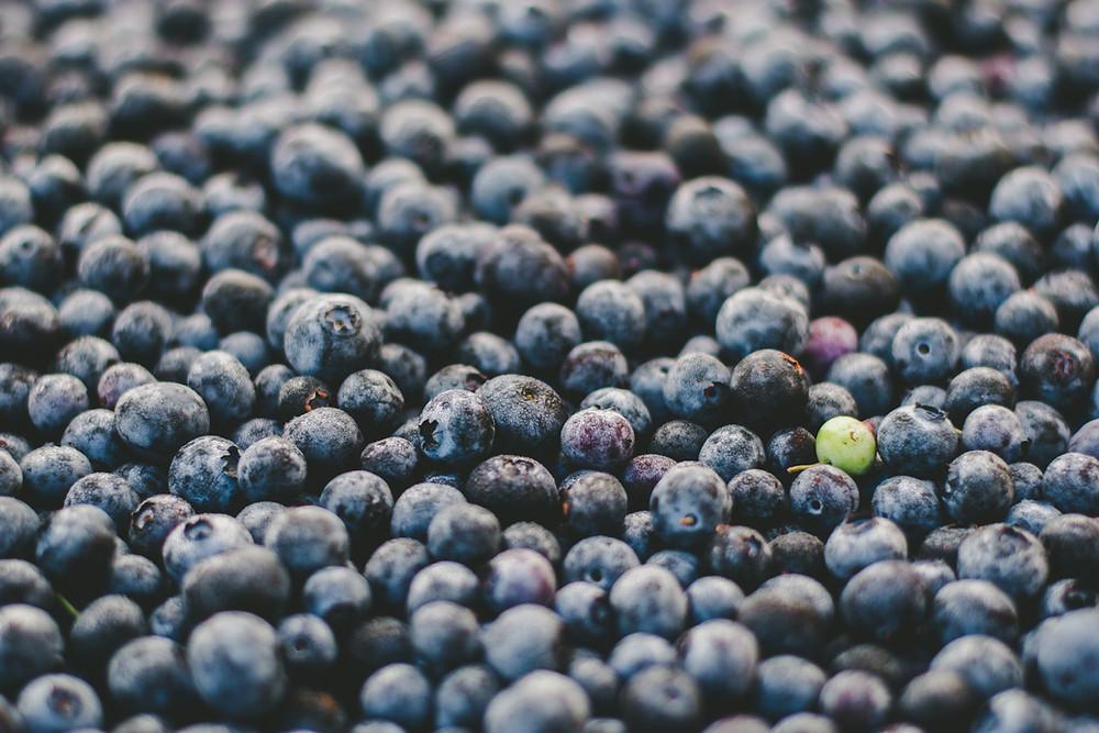 blueberries help probiotics grow in our gut