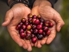 Libro: Desarrollo Rural Sostenible
