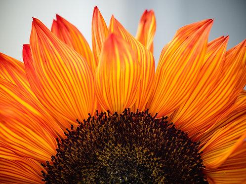 Expanding Gratitude Reiki Empowerment - Releasement from Negativity & Attachment