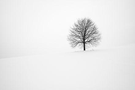 Image by Fabrice Villard