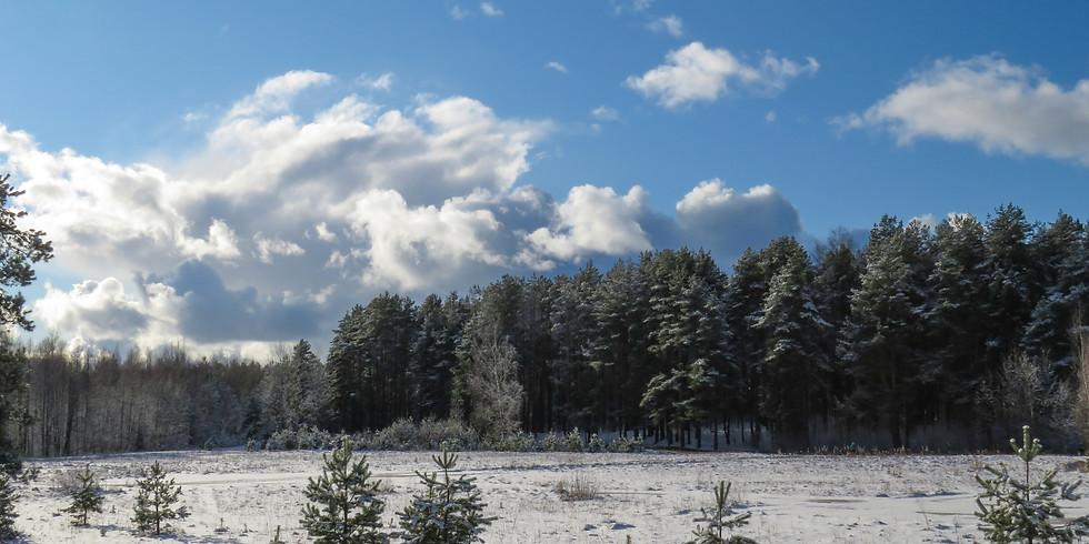 Winter Thaw