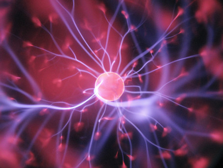 Importance of the Nervous System