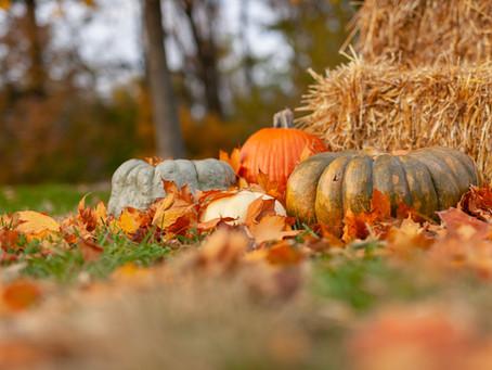 가을 추석입니다.