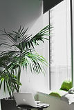 An indoor palm tree by a window