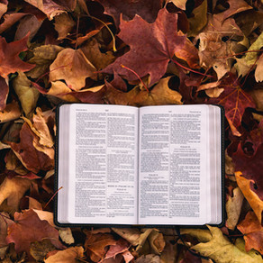 Bible Reflection: 5 Verses to Memorize and Recite - Make Amends