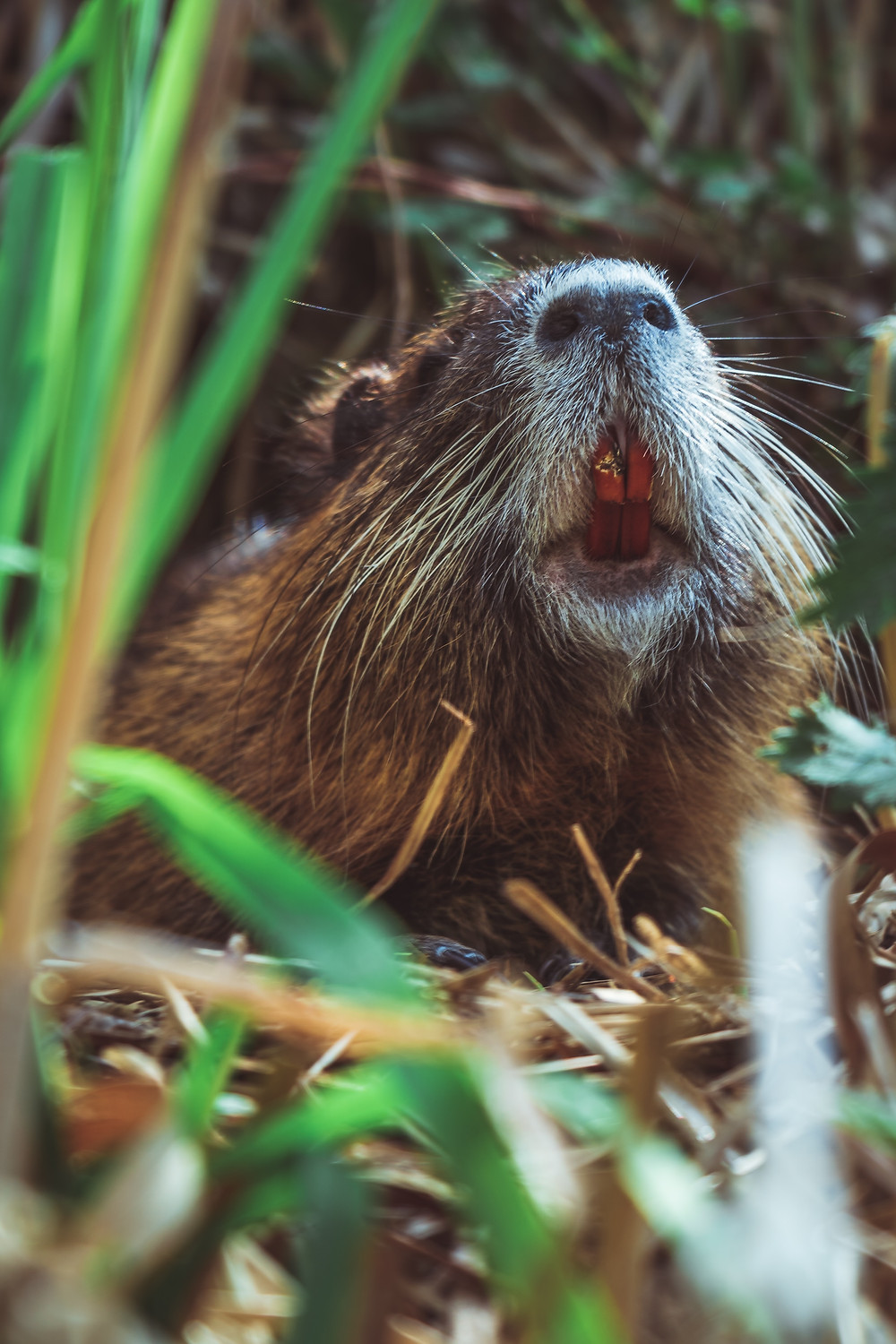 Beavers not responsible for tree loss