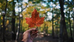 CANADA - GRANDEUR NATURE da 2.120€