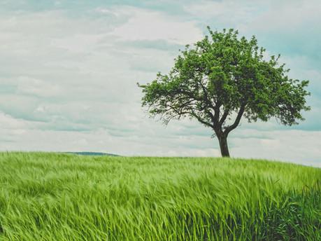 The Culture Tree: Seasons