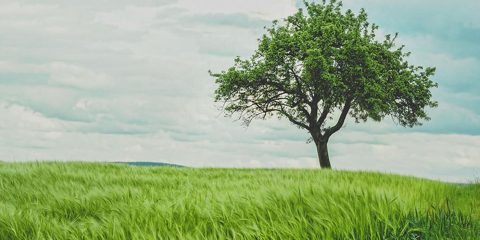 (VIRTUAL) Tree Story & Craft