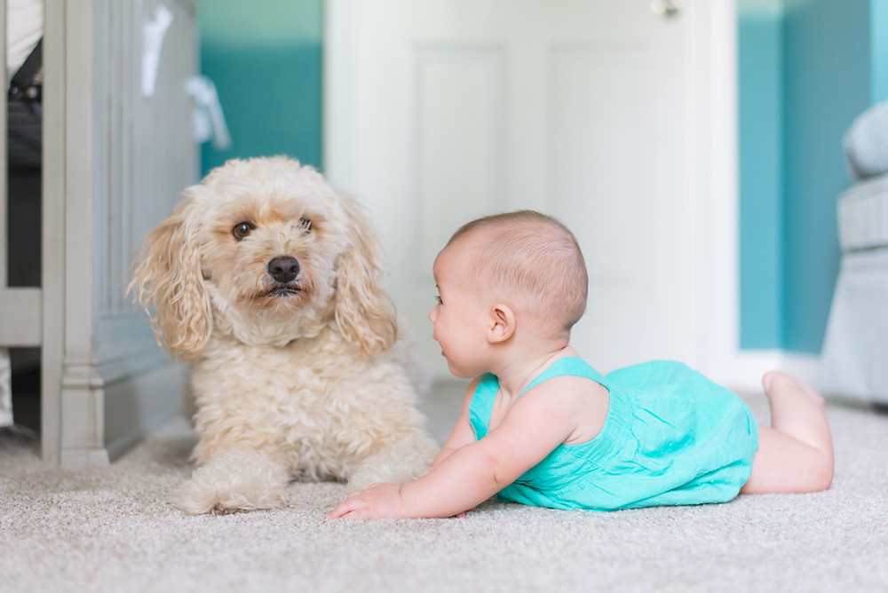 White flufy dog sitting next to baby on the carpet