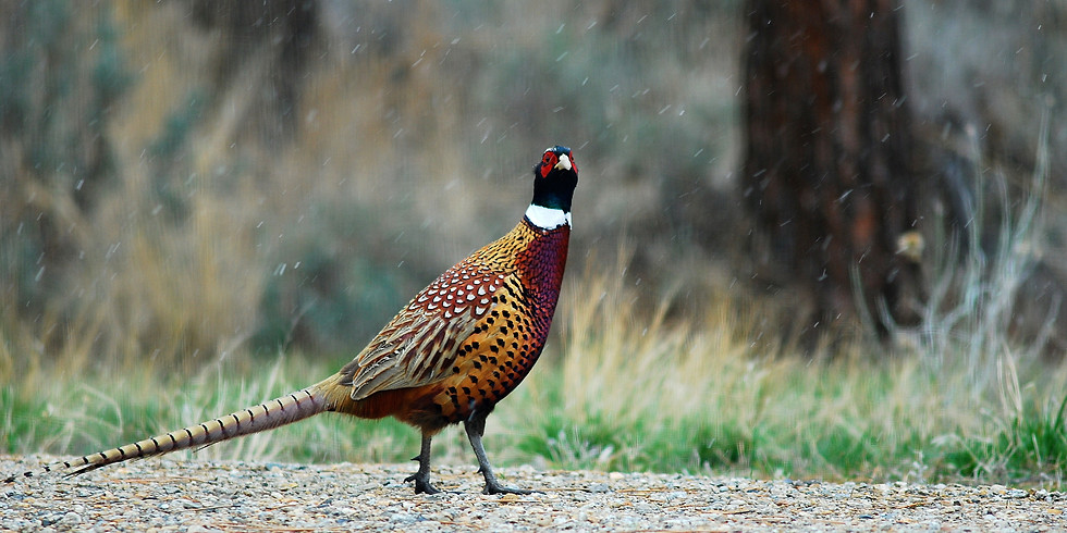 Draw Deadline for Pheasant & Sandhill Crane