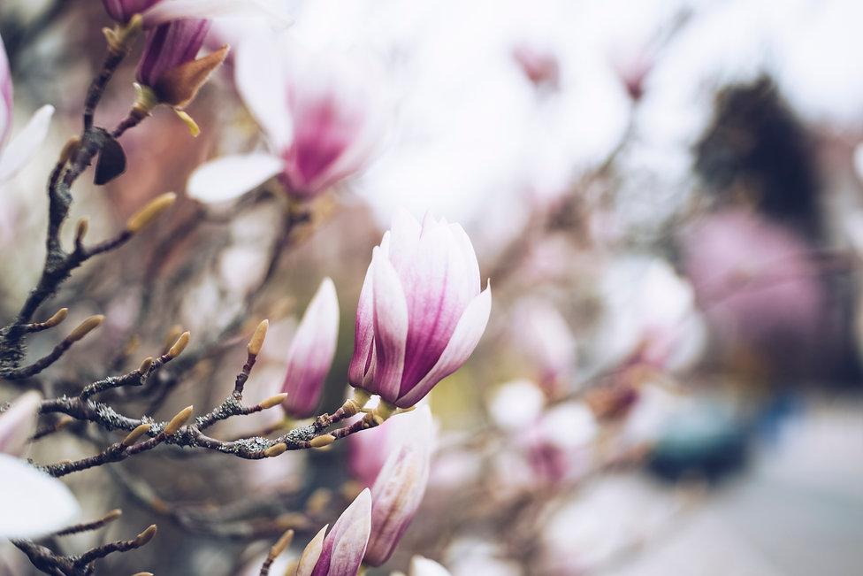 philosophie magnolia outdoors