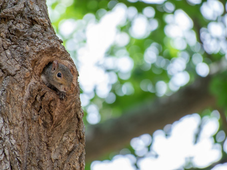 3 Tips For Finding More Squirrels