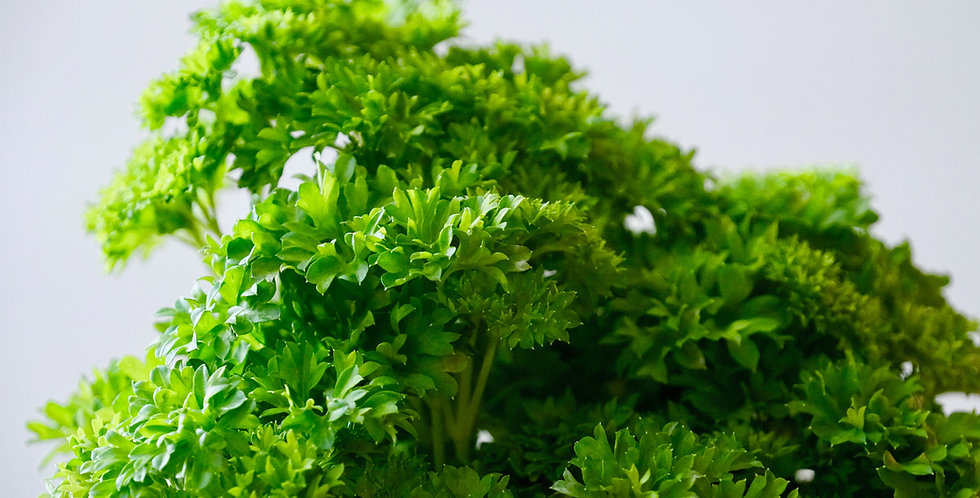 Herbs- Curly Parsley