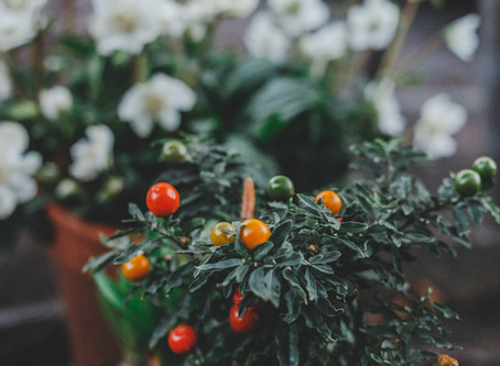 Five Tips for Feeding Plants!