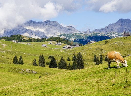 The Importance of Pastured Animals, Regenerative Agriculture, and Why Veganism is Not the Answer