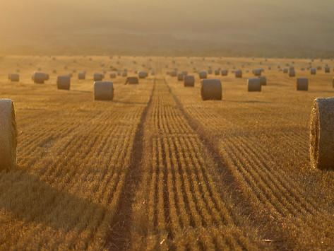 Siaran Pers   Investasi, Langkah Strategis Tingkatkan Daya Saing Pertanian