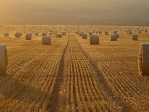 Siaran Pers | Investasi, Langkah Strategis Tingkatkan Daya Saing Pertanian