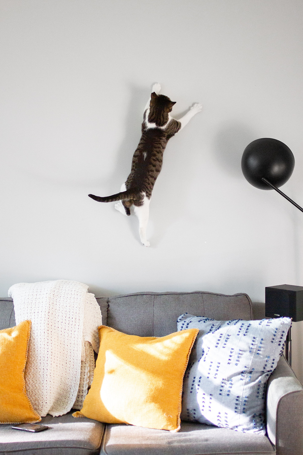 A cat has leaped from the top of a grey couch and is frozen mid leap halfway up the wall. The couch is grey with sun shining on the yellow and blue pillows. The area is neat and clean.