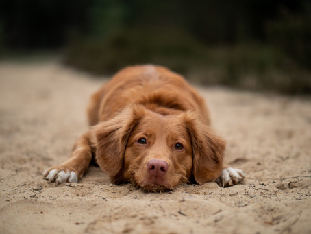 Dog Days of Summer: Is Your Pet Protected?