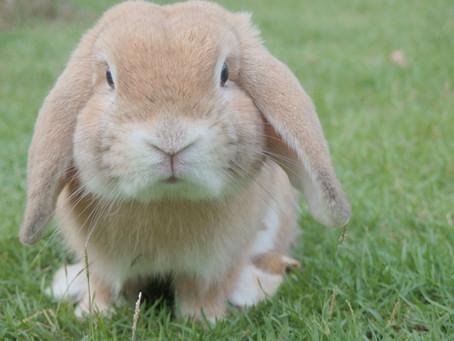 Rabbit, Rabbit. Bring on the Good Fortune