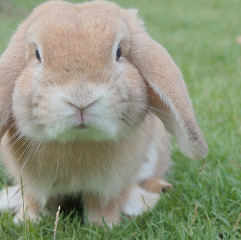 How To Introduce Your Pet Rabbit To A Cat Or Dog