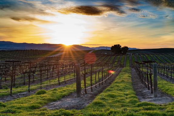 Vineyard in Vittoria