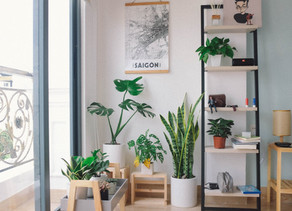 Air Cleaning Plants for the Home