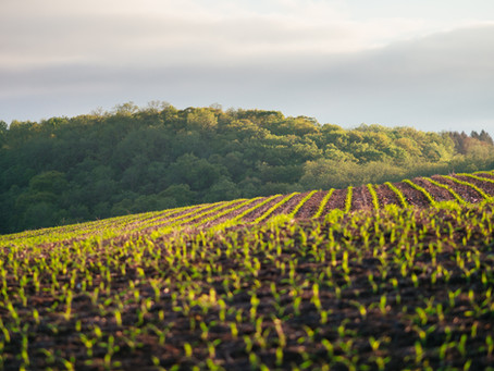 Reform of the Common Agricultural Policy (CAP) comes into force on June 1st 2023