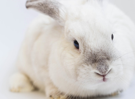 What do 'cruelty-free' and 'vegan' mean in home fragrance?