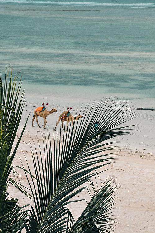 Mombasa beach - 5 days