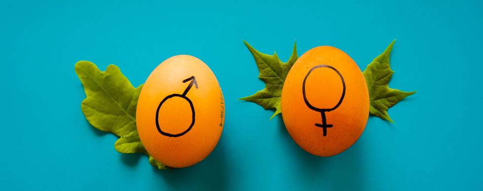Will The Future be Gender Equal ?   Intellify