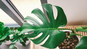 Houseplants ~ A Self Discovery in Ritual and Recovery