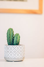 Cactuses not Blooming