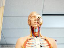 the Autonomic Nervous System - 1 Page Lesson