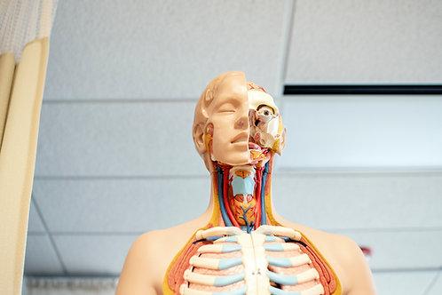 Human Body Innovations Camp