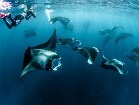 6 Amazing Places to Snorkel or Dive with Manta Rays in the World