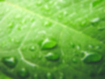 Total Green Services Atlanta Commercial Cleaning Service