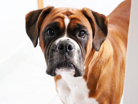 Bioresonanca za živali