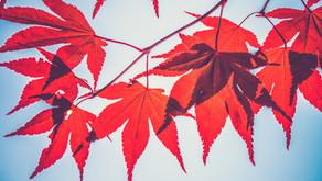 Autumn/Winter Skin Prep
