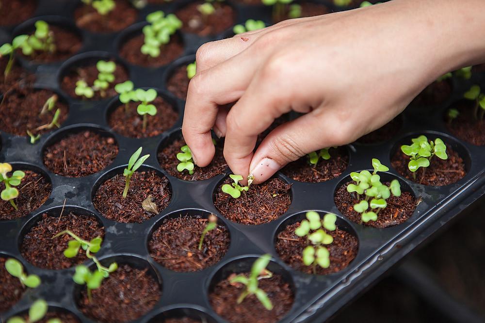 Comment faire pousser ses semis en intérieur