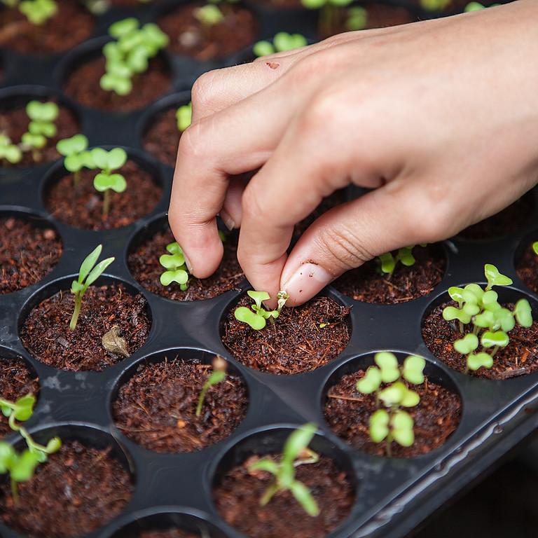 LEXSA DIY Seed Packs