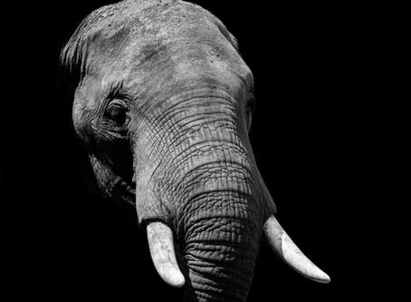 L'elefante e la stella