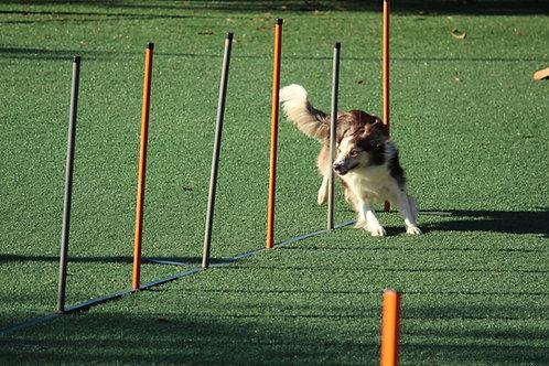 Agility (Parcour mit eigenem Hund)