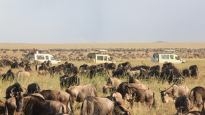 When this is over, I am flying off to Tanzania, home of the amazing Serengeti National Park