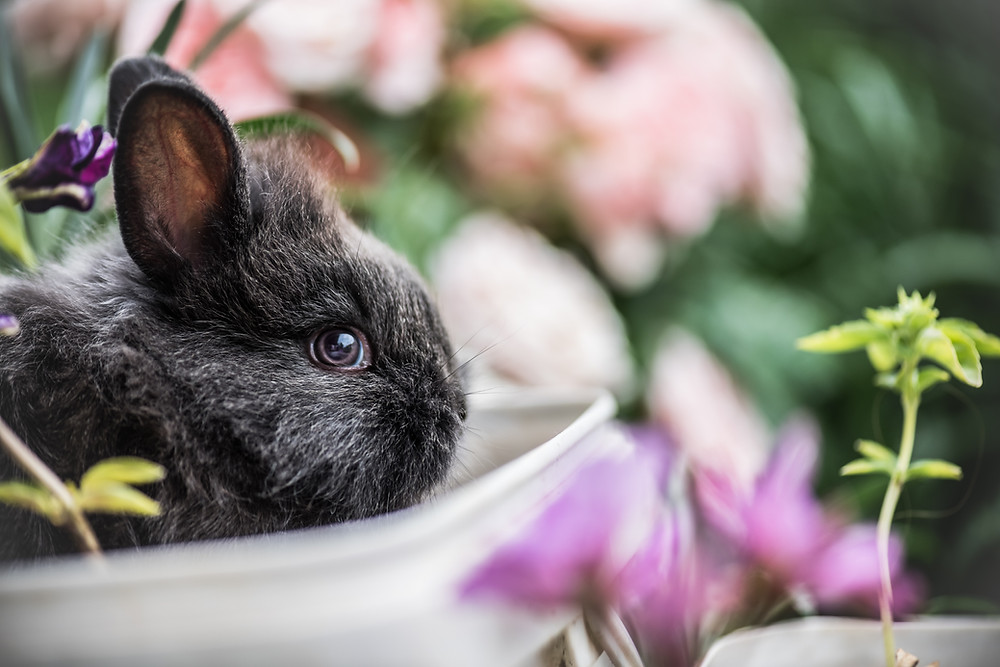 baby bunny with flowers