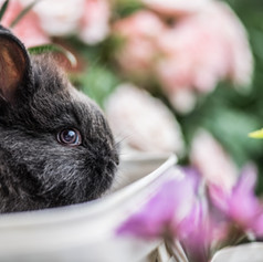 A bunny in a flower pot? Of course! Our bunnies are freely allowed in the gardens.