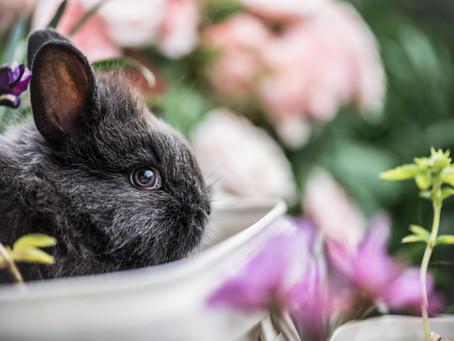 Vegan Easter Ideas